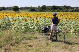 bicycle-in-sunflowers-loire-valley