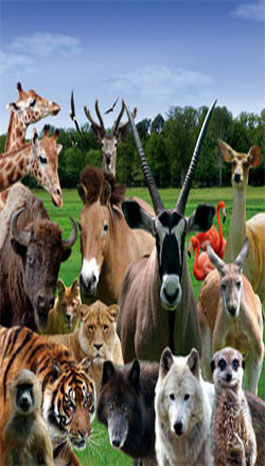 animal collection at Haute Touche safari park
